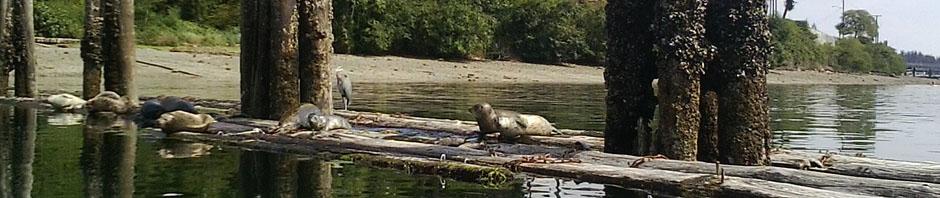 crop baby seal